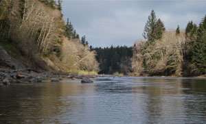 Bogachiel River Forks Washington