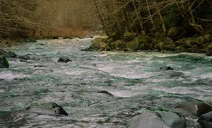 Calawah River Forks Washington